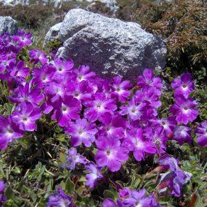 The Cansiglio Alpine Botanical Garden